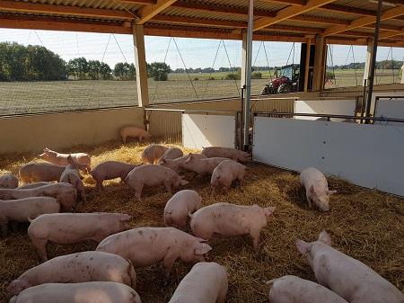 Auslauf Schweinestall mit Stroh