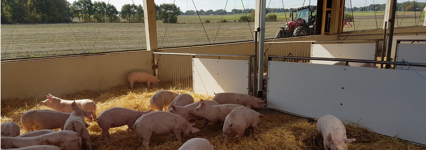 Schweine Stall tierwohl